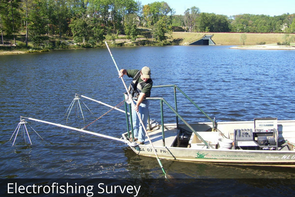 Electrofishing Survey