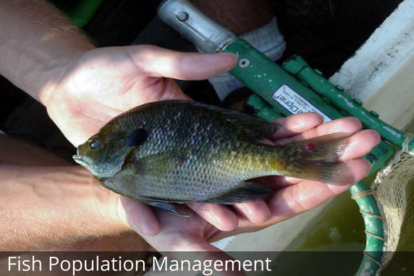 Fish Population Management