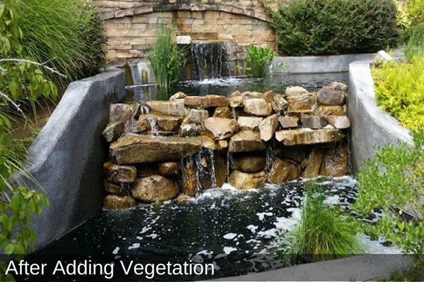 Water Feature After Adding Vegetation