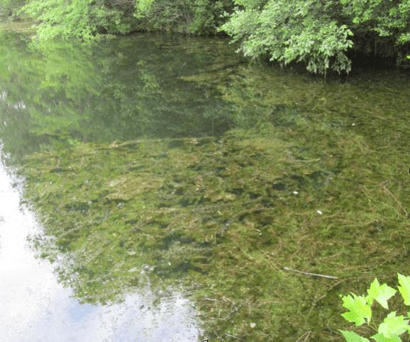Aquatic Invasives: Helping an Urban Nature Center Restore ...