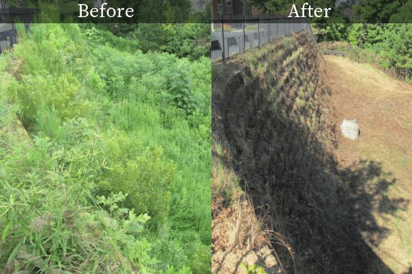 Stormwater Vegetation Management | Aquascape Enviromental